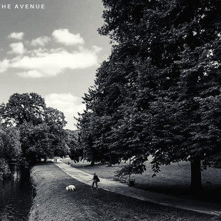 Stories from The Avenue