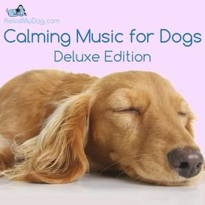 Relaxmydog