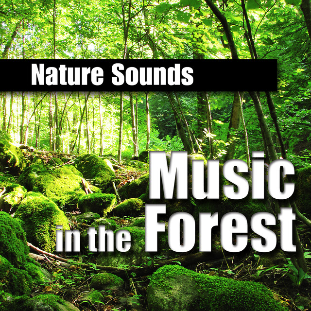 Music in the Forest (Music and Nature Sound) by Nature Sounds on Spotify