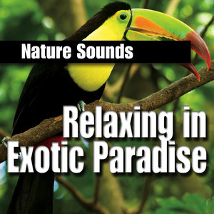 Relaxing in Exotic Paradise Albumcover