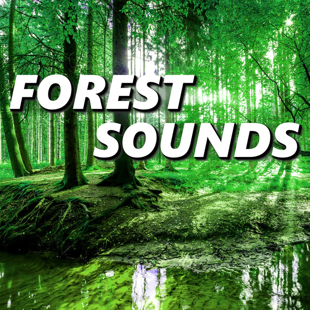 Forest Sounds by Forest and Nature Sounds on Spotify