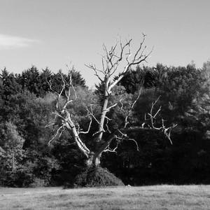 The Lightning Tree album