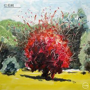 红毛树 Albümü