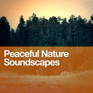 Peaceful Nature Soundscapes Albumcover