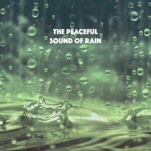 Soothing Rain from Nature Albümü