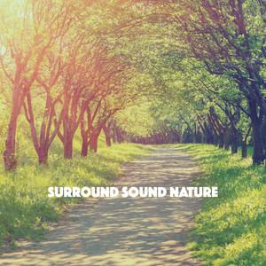 Surround Sound Nature Albümü