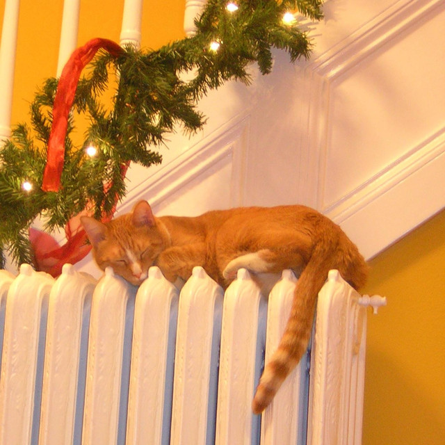 Decorate the Cat by Steve Weeks