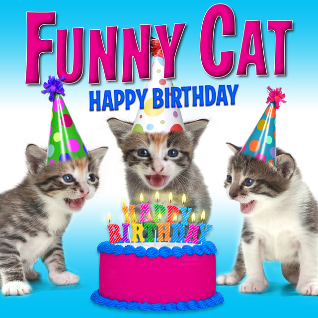 Happy Birthday Funny Cats Singing Version By On Spotify