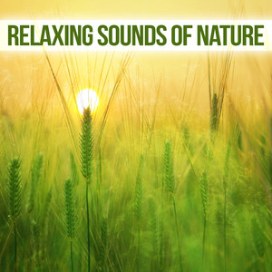 Relaxing Sounds of Nature – Soothing Water Sounds, Nature Calming Waves, Silent Sounds to Relax Albümü