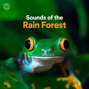 Sounds of the Rain Forestのサムネイル