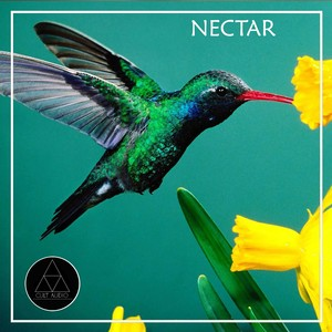 Nectar Albumcover