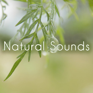 Natural Sounds Albumcover