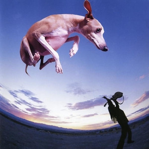 Flying Dog album
