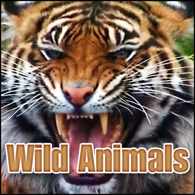 Wild Animals: Sound Effects by Sound Effects Library on Spotify