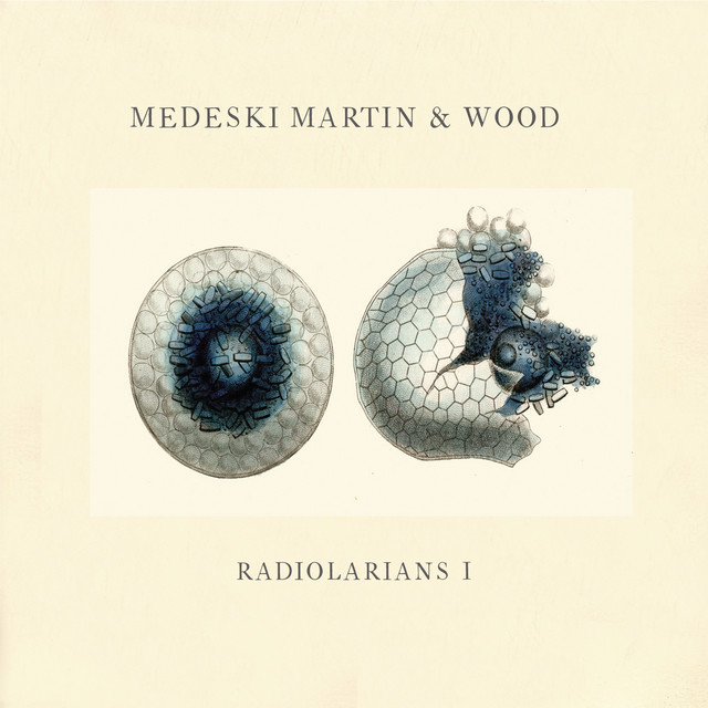 Radiolarians 1