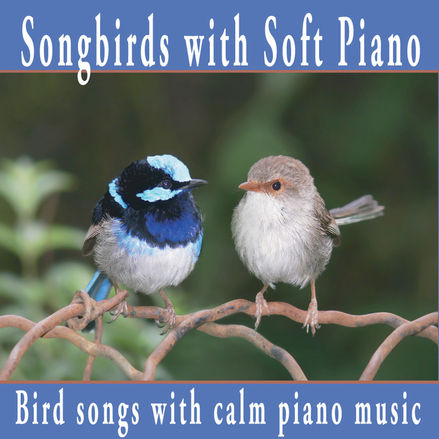 Songbirds With Soft Piano: Nature Sounds, Bird Sounds with