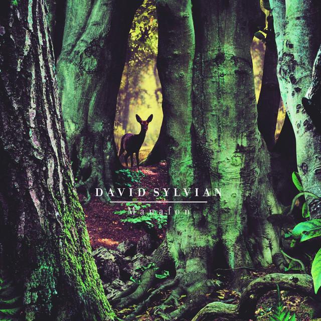 David Sylvian Manafon album cover