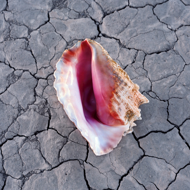 Album cover for Wonderful Wonderful (Deluxe) by The Killers