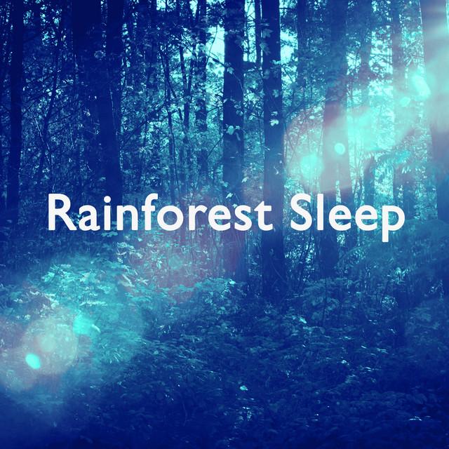 Rainforest Sleep Albumcover