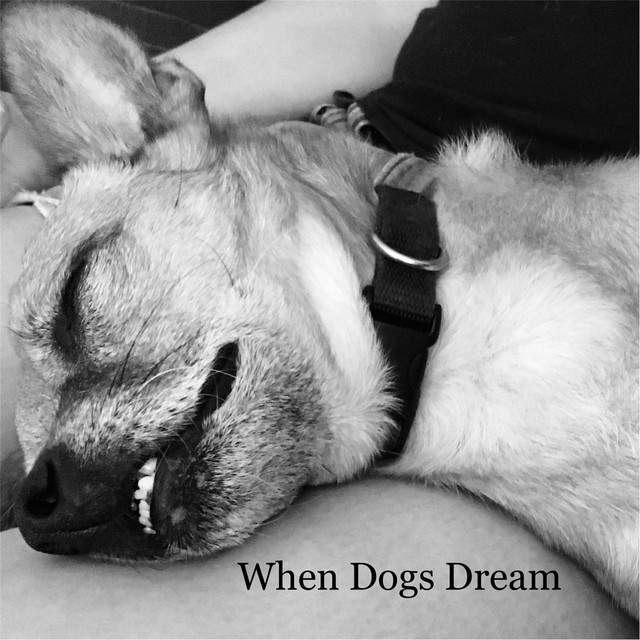 When Dogs Dream
