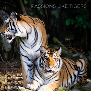 Passions Like Tigers Albumcover