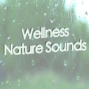 Wellness Nature Sounds (Rain) Albumcover