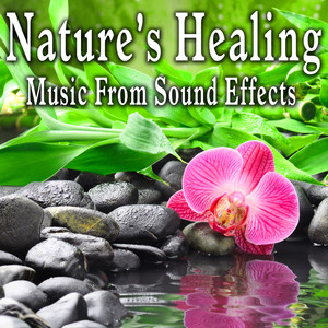 Nature's Healing: Music from Sound Effects Albumcover