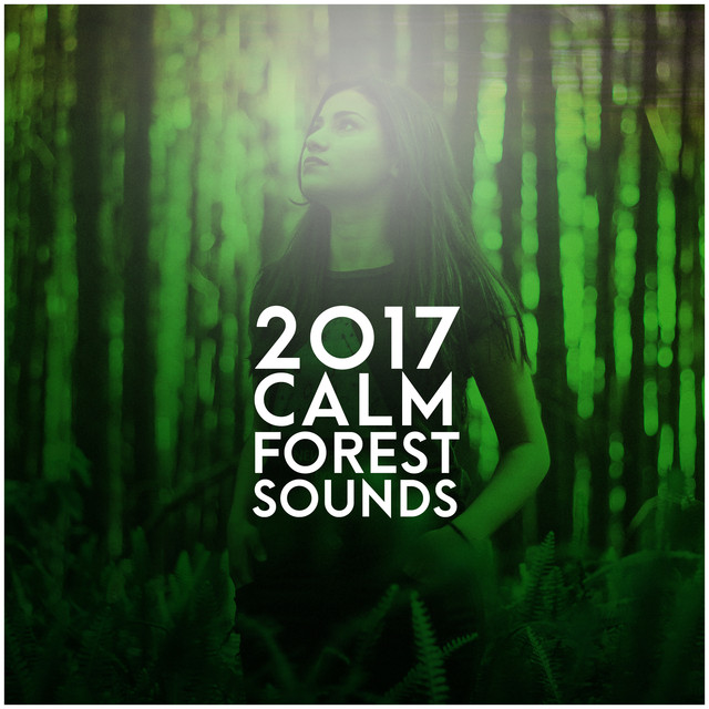 2017 Calm Forest Sounds by Forest Sounds on Spotify