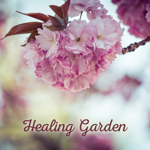 Healing Garden – Calming Relaxation Music for Massage, Rest, Peaceful New Age Sounds, Full of Nature, Falling Water, Birds Songs Albümü