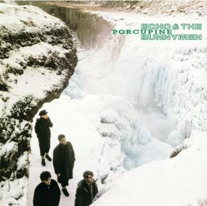 Porcupine album