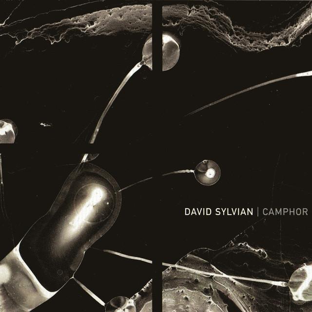 David Sylvian Camphor album cover