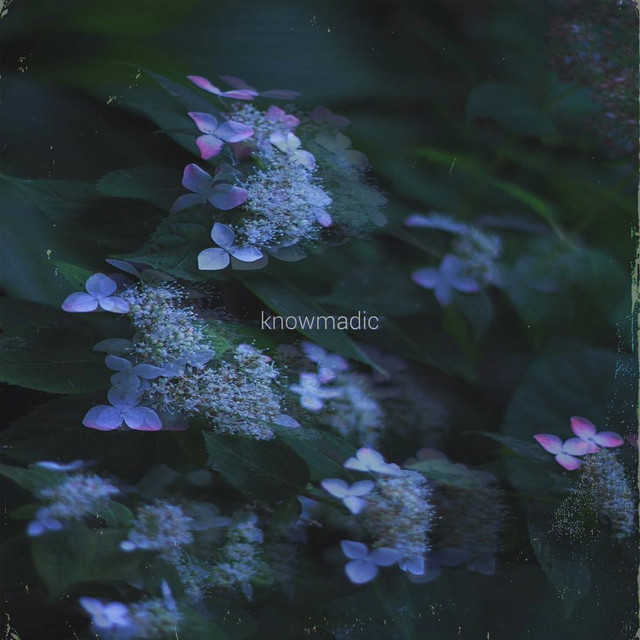 Album cover for Hydrangea by Knowmadic