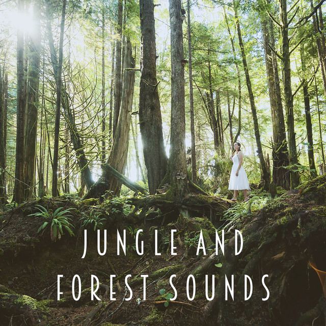 Jungle And Forest Sounds