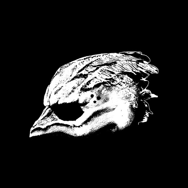 Album cover for Legend of the Seagullmen by Legend Of The Seagullmen