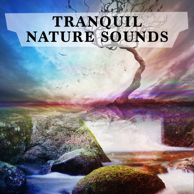 Tranquil Nature Sounds Albumcover