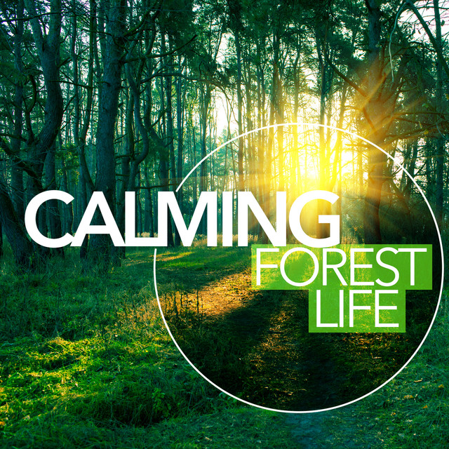 Calming Forest Life Albumcover