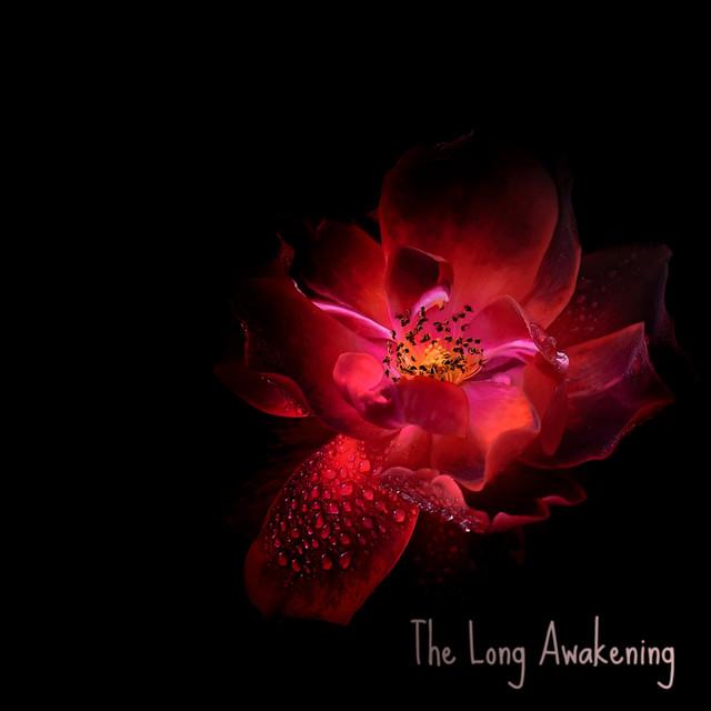 The Long Awakening