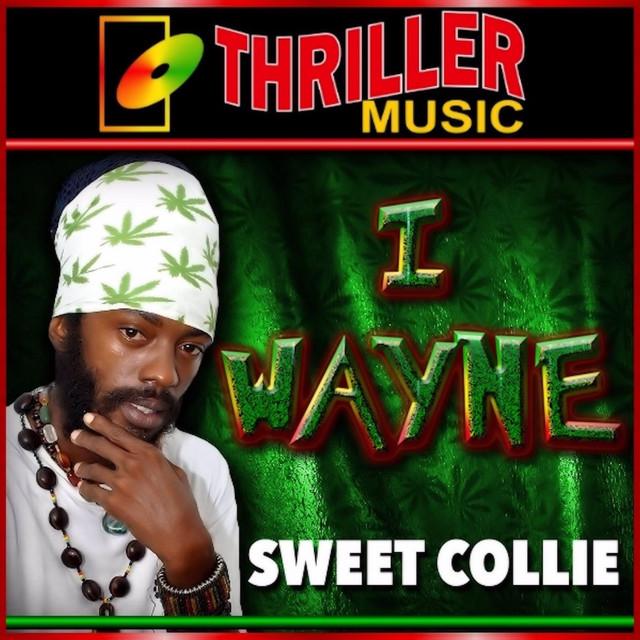 Sweet Collie