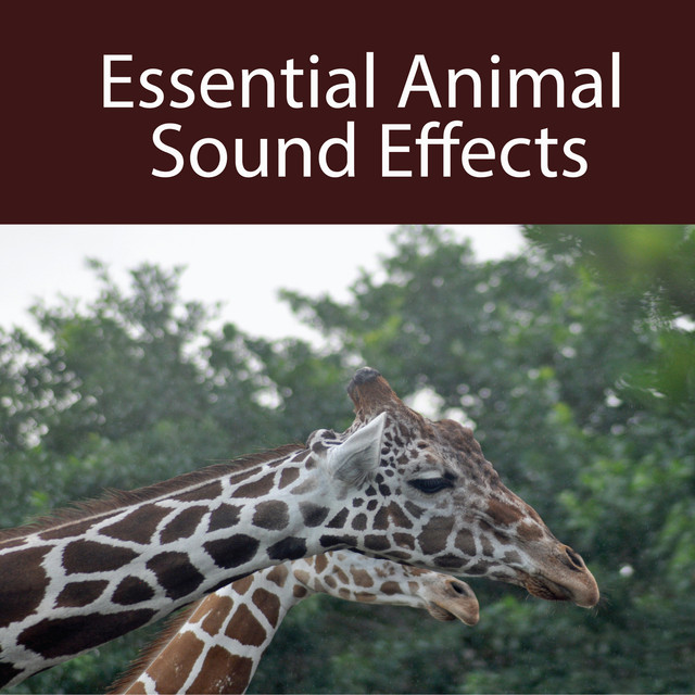 Alligators, Hissing, a song by Sound Effects on Spotify