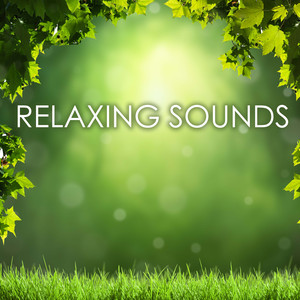 Relaxing Sounds Zen Ambience - Keep Calm & Anxiety Free Albumcover