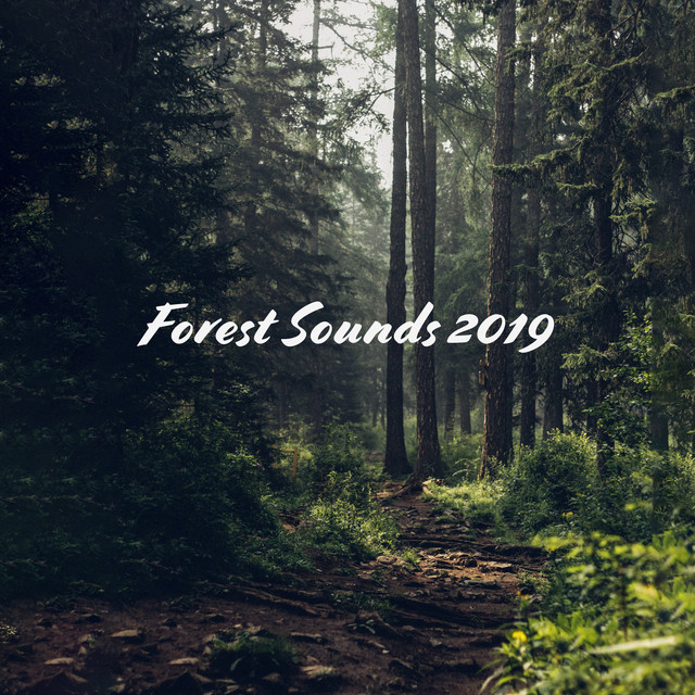 Forest Sounds 2019 by Forest Hills Music Universe on Spotify
