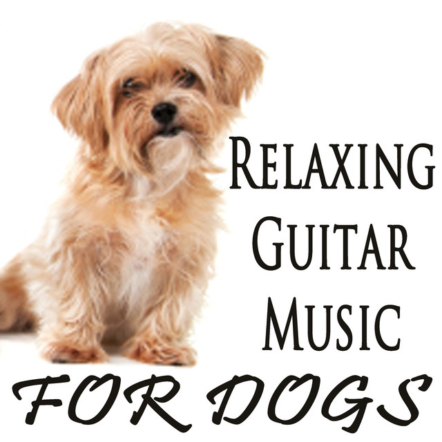 Relaxing Guitar Music for Dogs