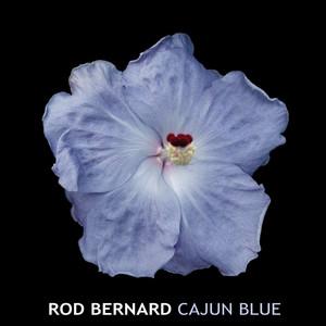 Cajun Blue album