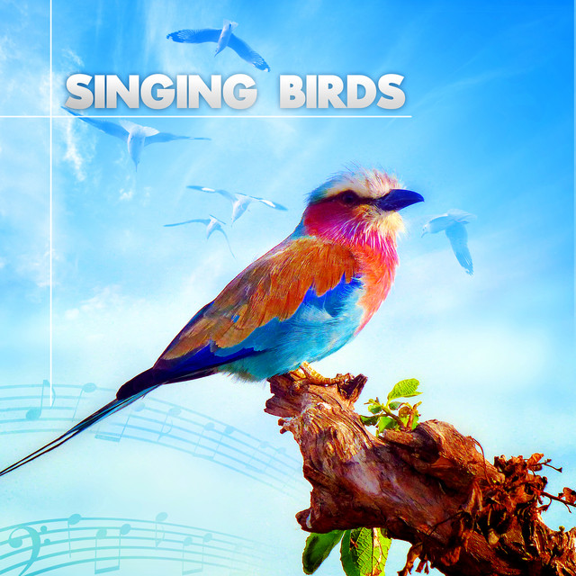 Singing Birds – Amazing Sound Effects of Birds, Forest Ambience, Morning Bird Calls for Relaxation Albumcover