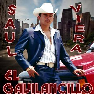 Key Bpm For Chito Cano By Saul Viera El Gavilancillo Tunebat