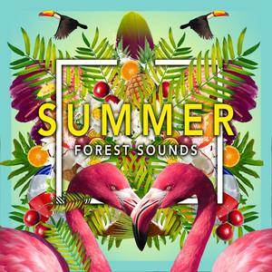 Summer Forest Sounds