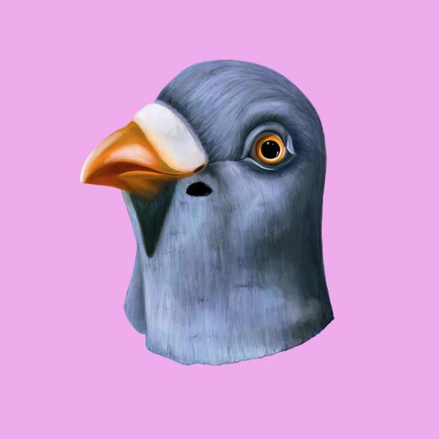 Still Pigeon
