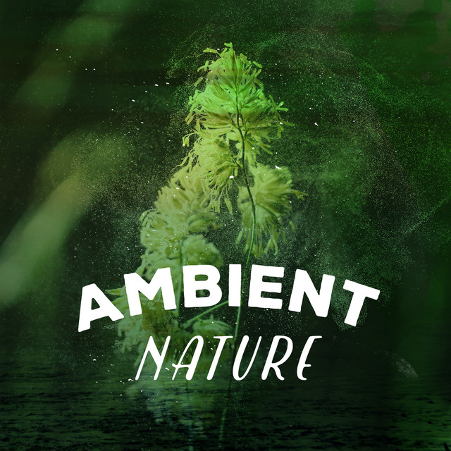 Ambient Nature Albumcover