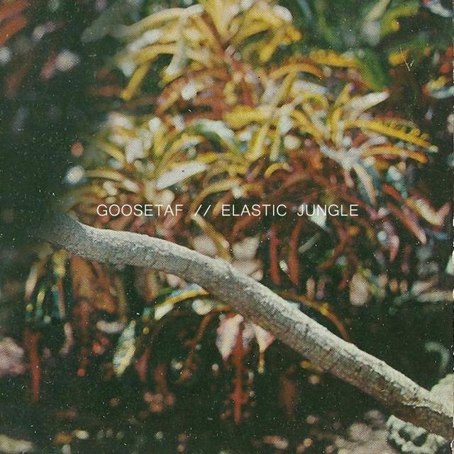 Elastic Jungle