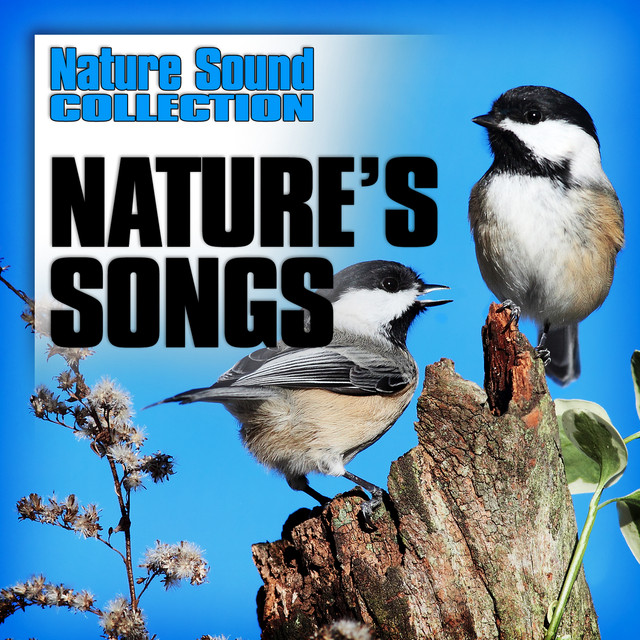 Chirping Budgie, a song by Nature Sound Collection on Spotify